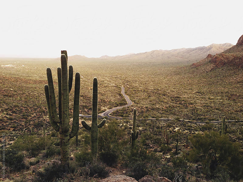 Desert Valley Road with Cactus by Kevin Russ for Stocksy United
