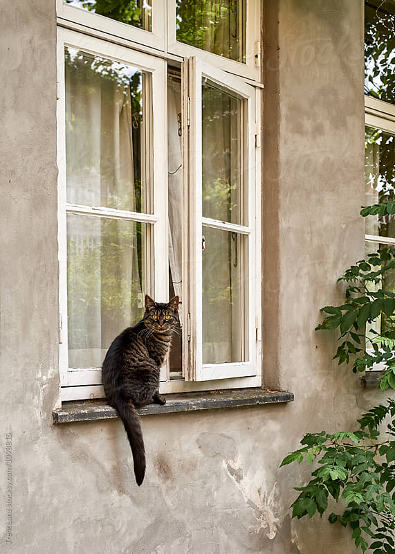 Grey cat on window-sill looking with yellow eyes by Trent Lanz for Stocksy United
