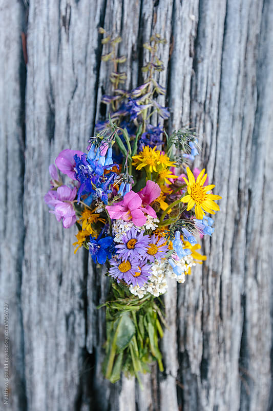 Bouquet of wild wildflowers on tree by Matthew Spaulding for Stocksy United