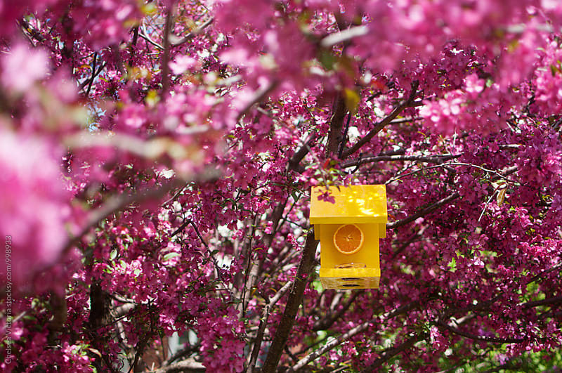 A bird feeder in a blossoming tree