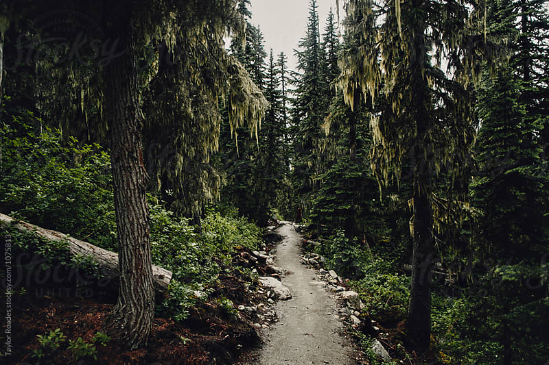 Forest Path by Taylor Roades for Stocksy United
