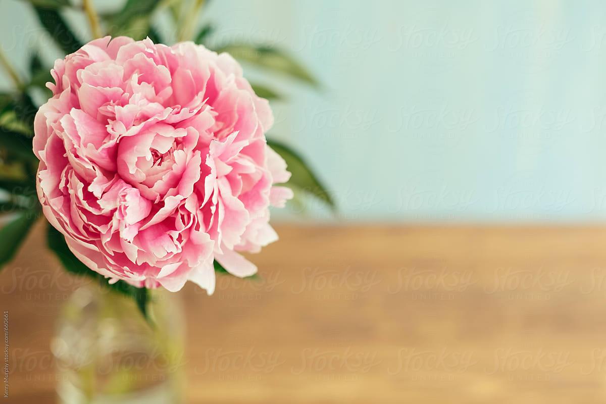 Single Pink Peony Flower In Vase Stocksy United