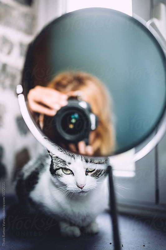 Cat looking through the mirror while you take photo by Thais Ramos Varela for Stocksy United