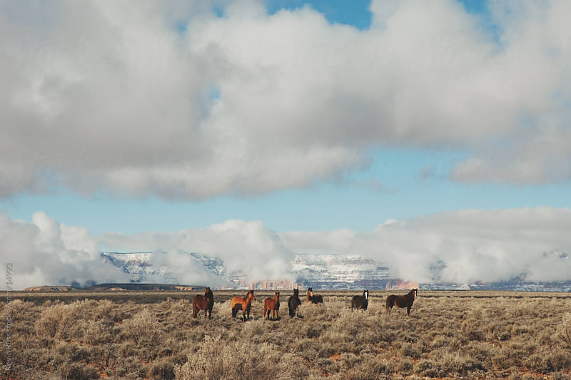 Wild Canyon Horses by Kevin Russ for Stocksy United