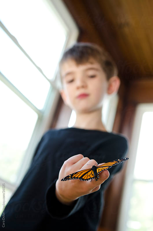 Boy holds butterfly on finger by Cara Dolan for Stocksy United