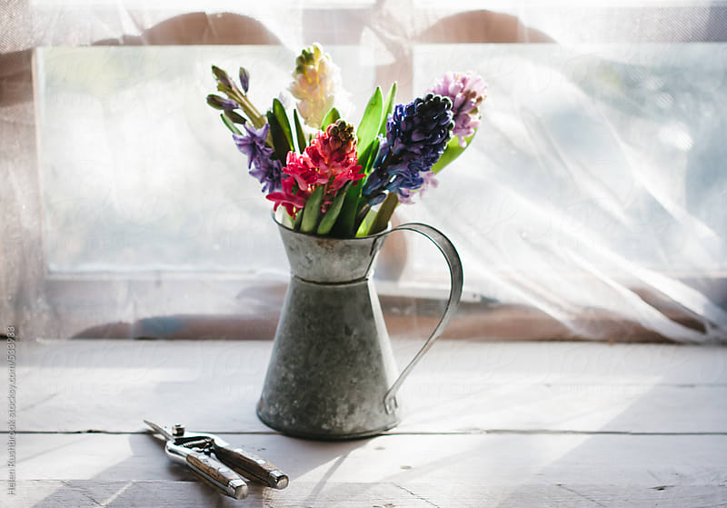 A light and airy image of hyacinth flowers in a shabby chic jug. by Helen Rushbrook for Stocksy United