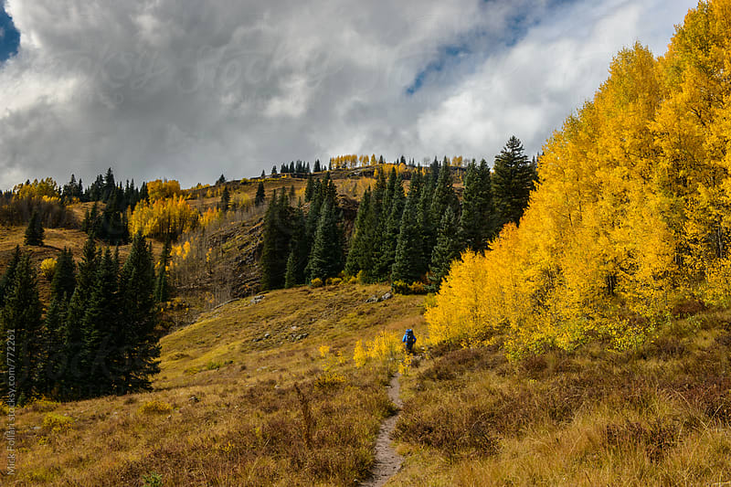 Hiker on mountain trail though yellow aspens by Mick Follari for Stocksy United