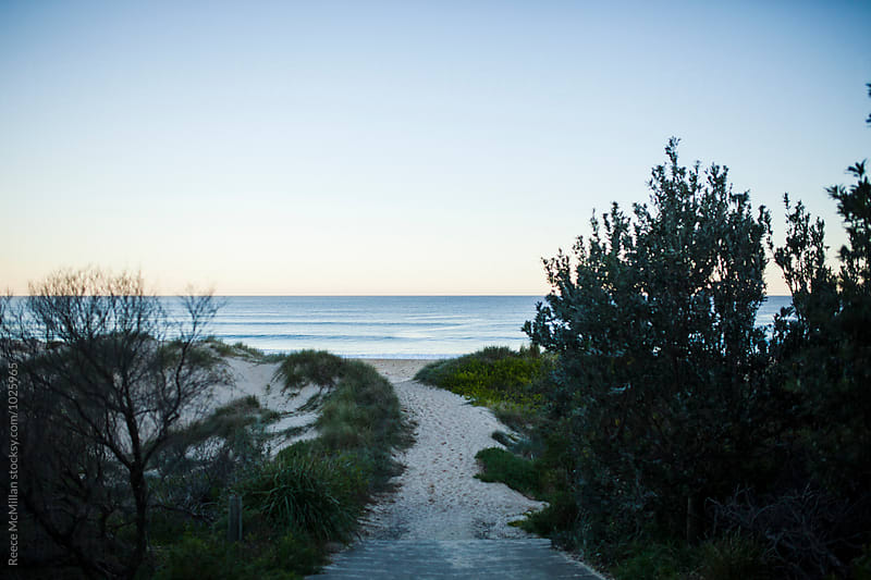 The path to the beach, Sussex Inlet by Reece McMillan for Stocksy United