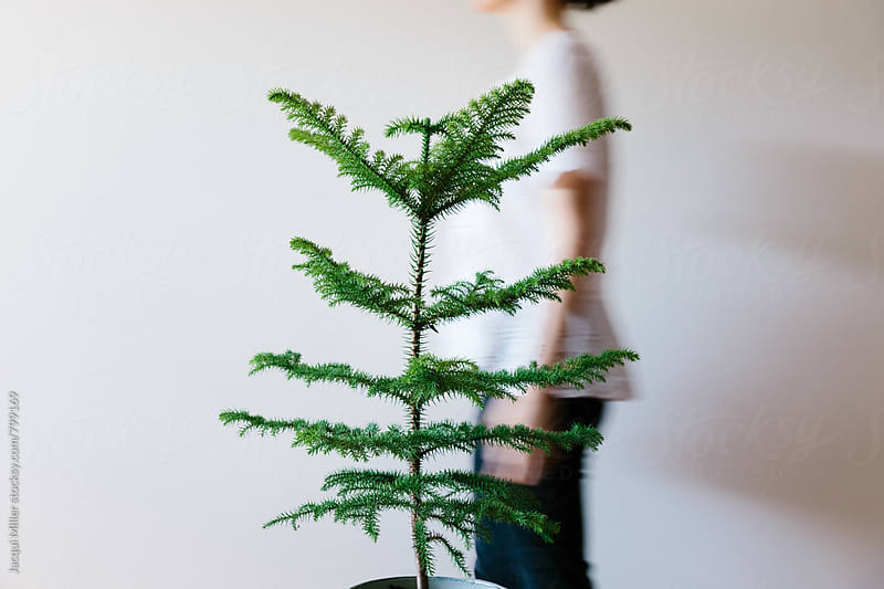 Movement shot of woman walking behind a small Norfolk Island Pine Tree in a pot by Jacqui Miller for Stocksy United