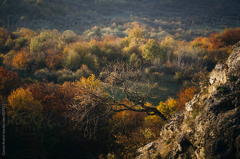 Tree on cliff in autumn by Cosma Andrei for Stocksy United
