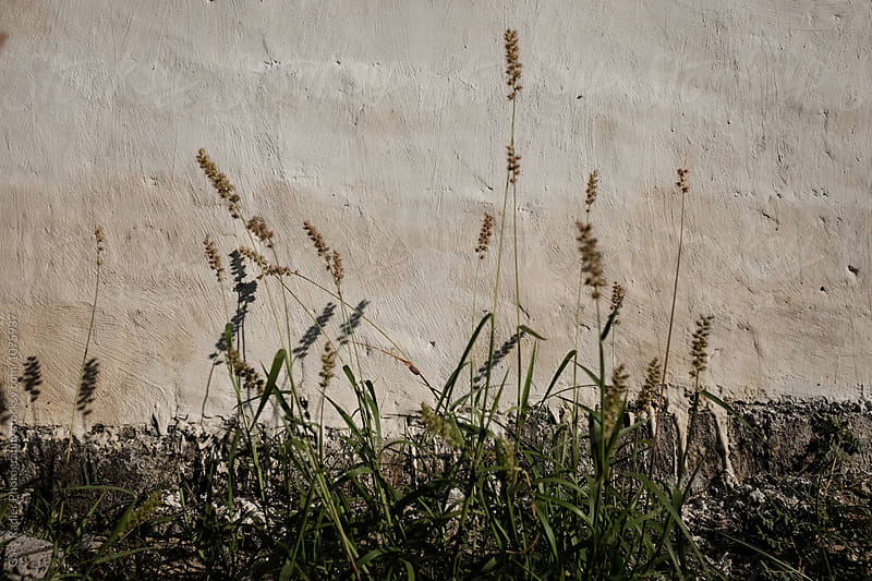 Grass against a Rendered Wall by Gary Radler Photography for Stocksy United