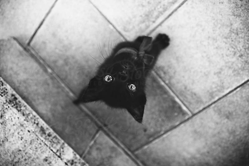 Black kitten looking up by Silvia Cipriani for Stocksy United