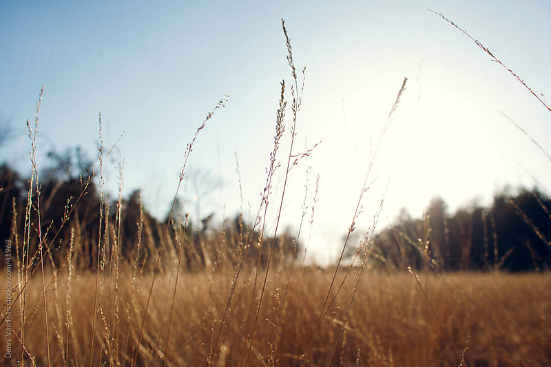 Low sun shining over a grass field by Denni Van Huis for Stocksy United