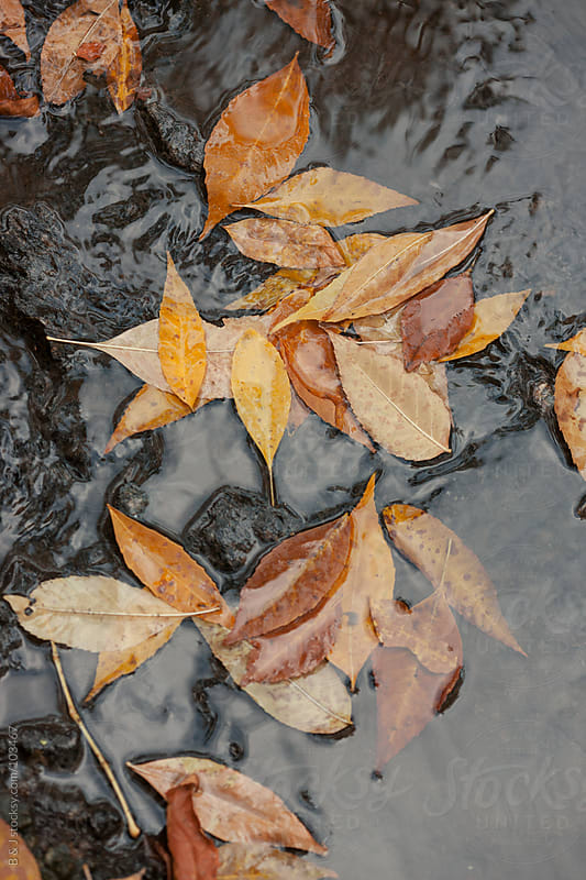 puddle and leaves  by B & J for Stocksy United