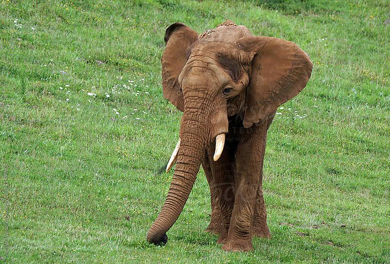 Elephant by Marilar Irastorza for Stocksy United