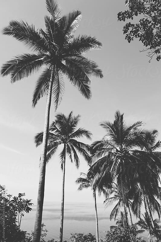 Black and white photo of palms by Andrey Pavlov for Stocksy United