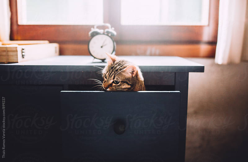 cat in a drawer   by Thais Ramos Varela for Stocksy United
