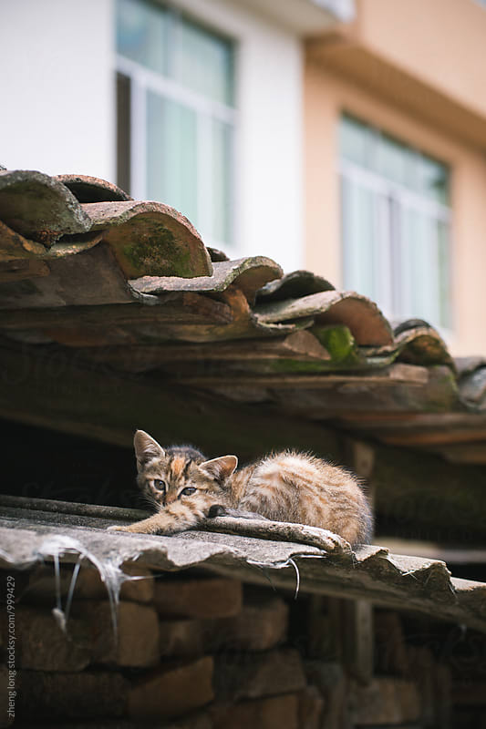 stray cats by zheng long for Stocksy United