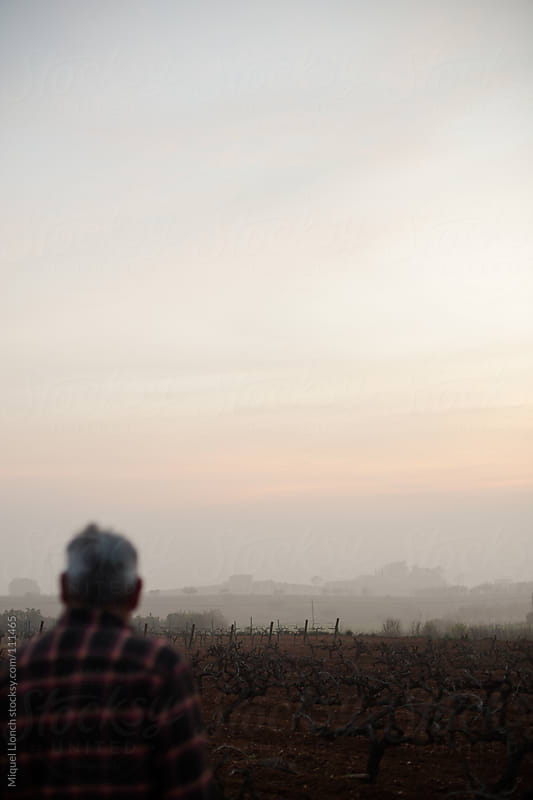 Old farmer watching the vineyards at dawn by Miquel Llonch for Stocksy United
