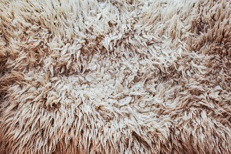 White Sheepskin Overhead by Julien L. Balmer for Stocksy United
