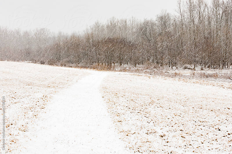 snowy path through a meadow by Deirdre Malfatto for Stocksy United