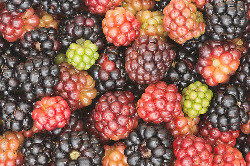 Blackberries, closeup by Mark Windom for Stocksy United
