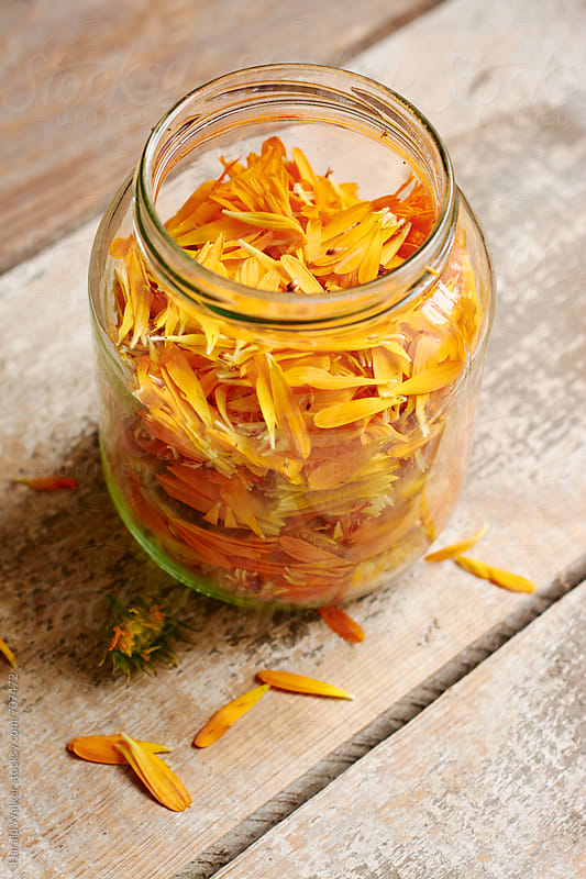 Calendula petals by Harald Walker for Stocksy United