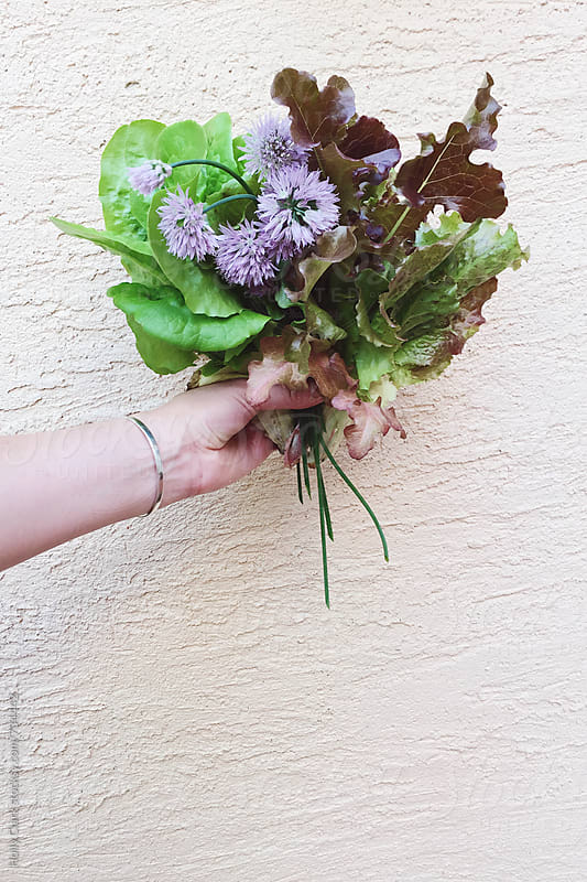 Woman's hand holding bouquet of lettuce and herbs by Holly Clark for Stocksy United