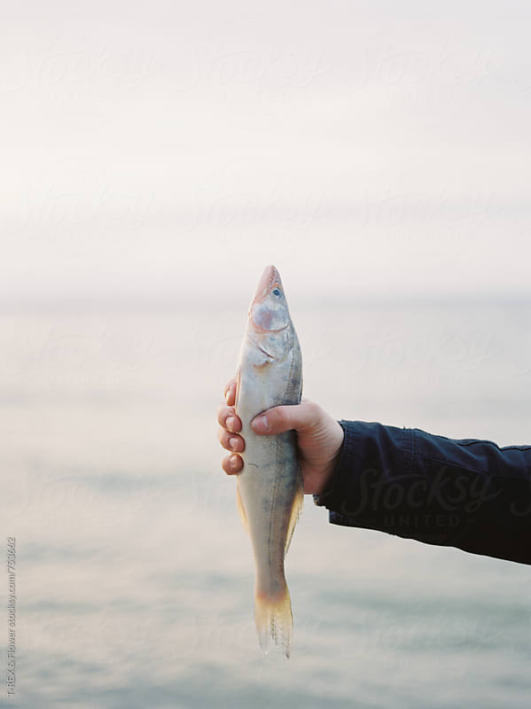 Man's hand holding raw pike perch by Danil Nevsky for Stocksy United