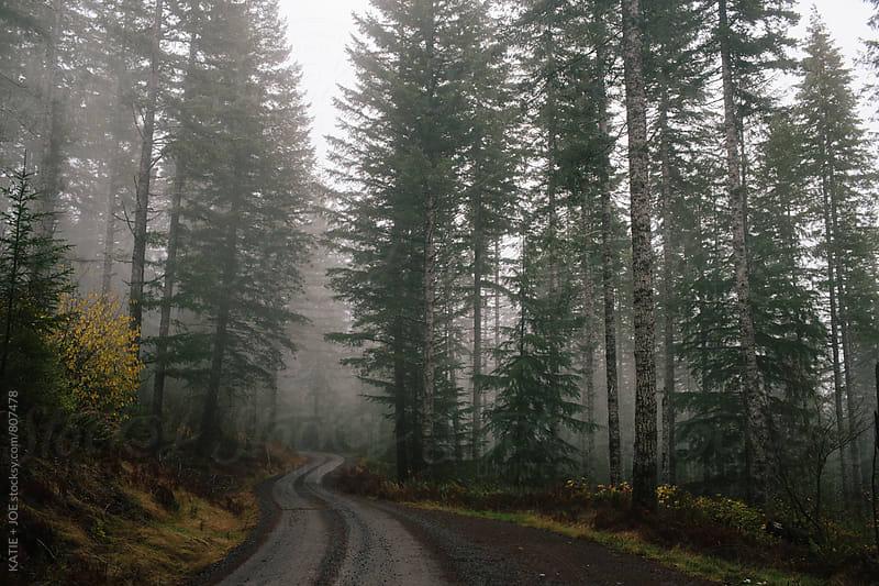 Foggy Path by KATIE + JOE for Stocksy United