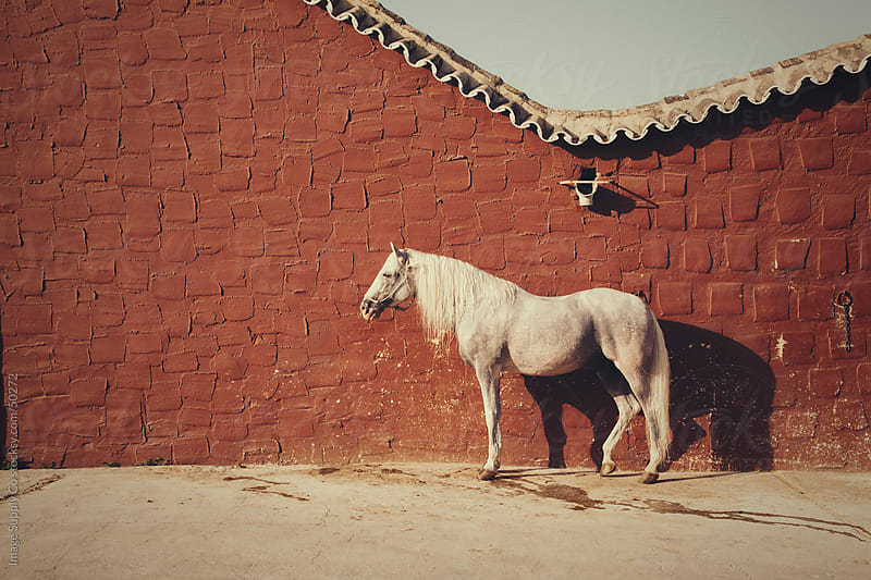 White horse on Red Wall by Image Supply Co for Stocksy United