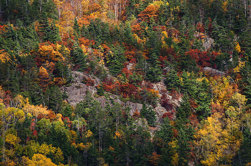 All the Fall Colors by Brian Koprowski for Stocksy United