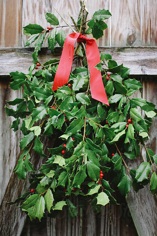 Holiday Christmas holly and berries tied with a red bow on a wooden fence by Greg Schmigel for Stocksy United