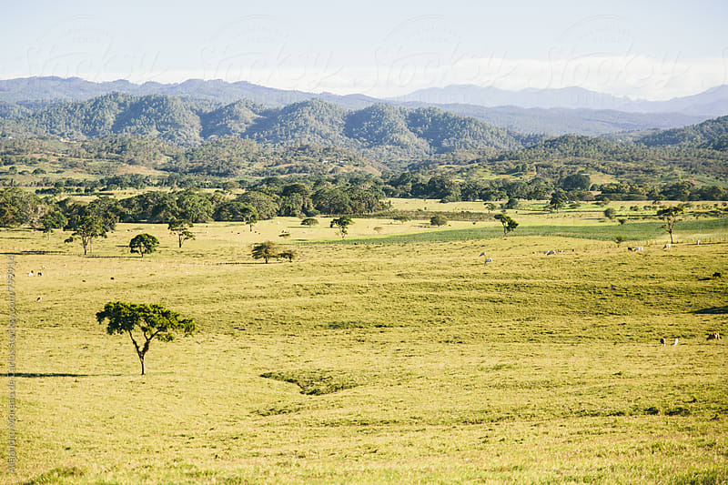 Landscape of green open farmland with hills in the background by Alejandro Moreno de Carlos for Stocksy United