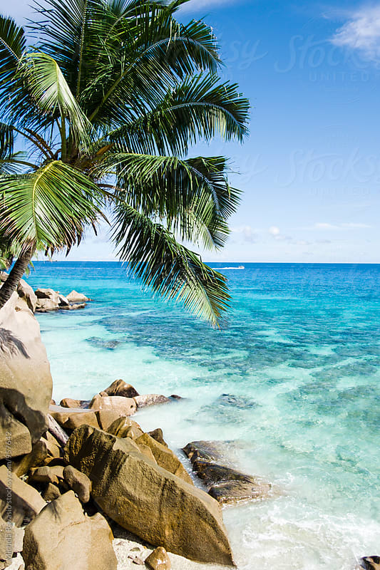 Tropical seascape with palm tree and rocks by michela ravasio for Stocksy United