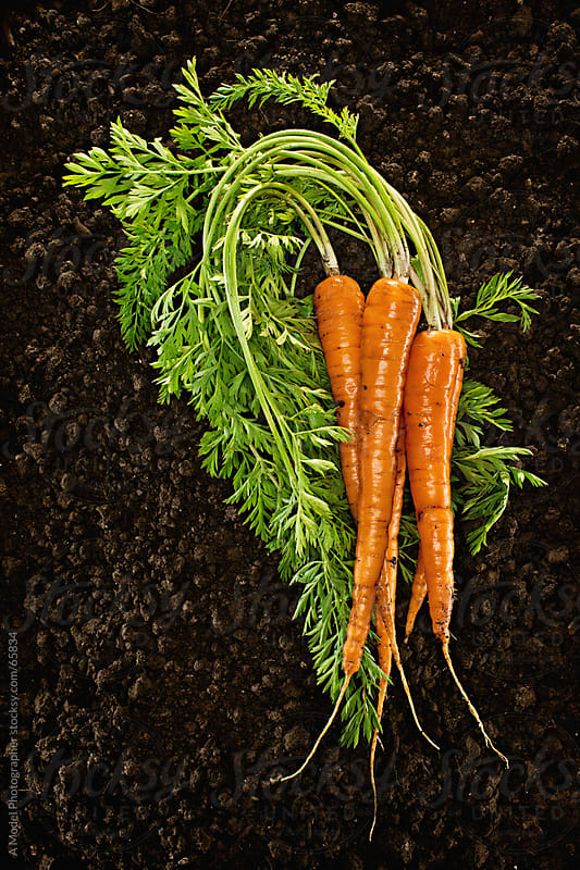 Organic  :Fresh picked natural vegetable in soil by Ania Boniecka for Stocksy United