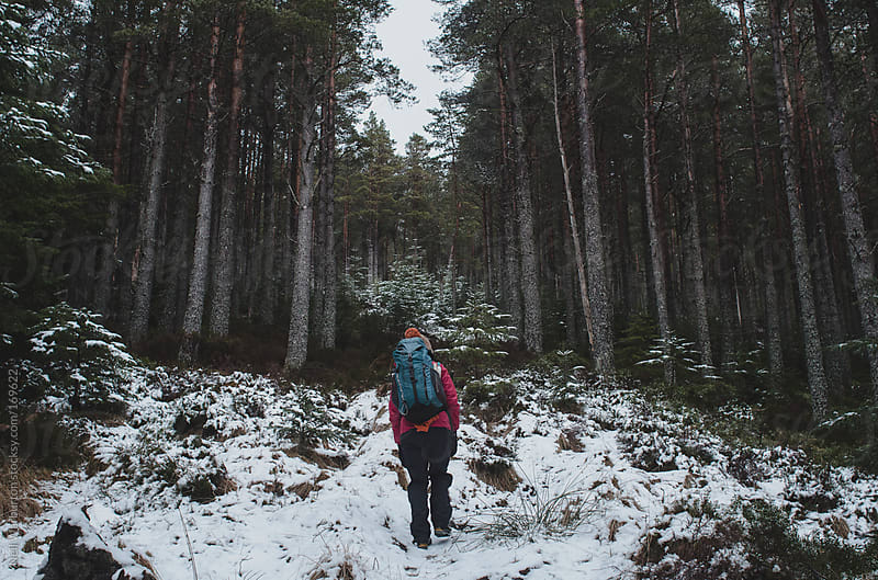 Hiking Through the Pines by Neil Warburton for Stocksy United