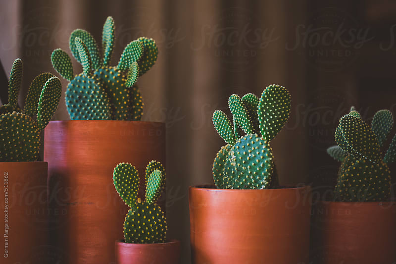Cactus in pretty pots by German Parga for Stocksy United