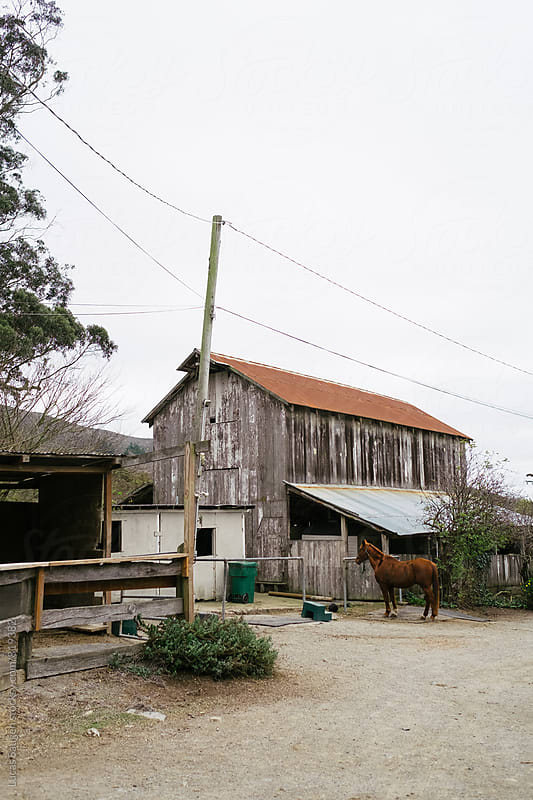 Horse stands at an old barn. by Lucas Saugen for Stocksy United