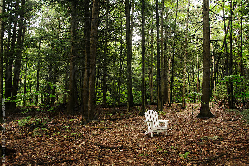 Adirondack Chair in Maine Woods by Raymond Forbes LLC for Stocksy United