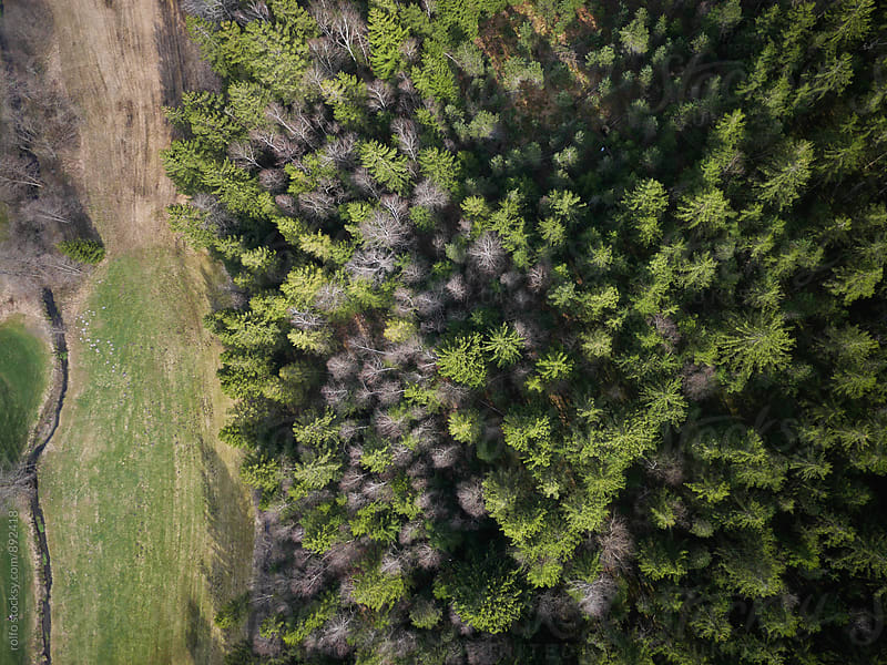Aerial view on green land and coniferous forest  by rolfo for Stocksy United