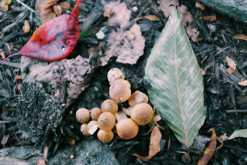 Wild mushrooms and fungus in a forest in the Autumn and Fall season by Greg Schmigel for Stocksy United
