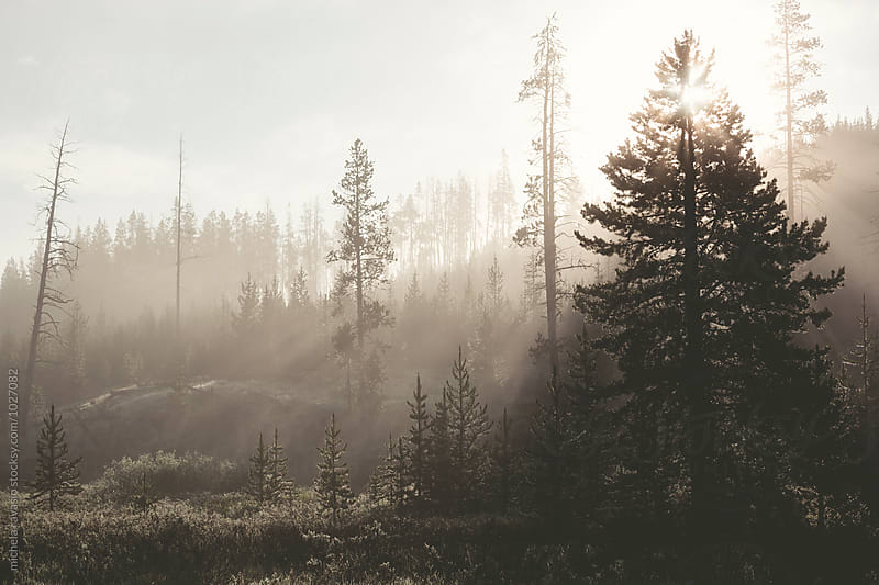 Early morning in the forest by michela ravasio for Stocksy United