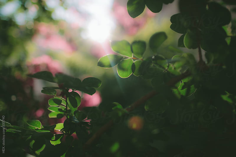 Spring Green Leaf With Sunlight by HEX. for Stocksy United