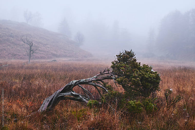 Tree in the fog. Tarn Hows, Cumbria, UK. by Liam Grant for Stocksy United