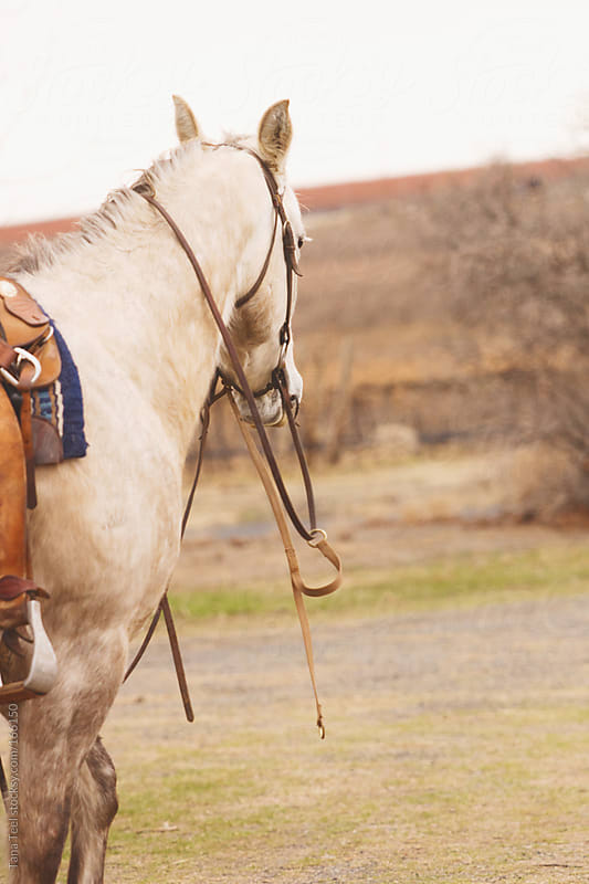 A horse stands with reins hanging around his neck by Tana Teel for Stocksy United