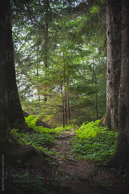 Tree Path by Shelly Perry for Stocksy United