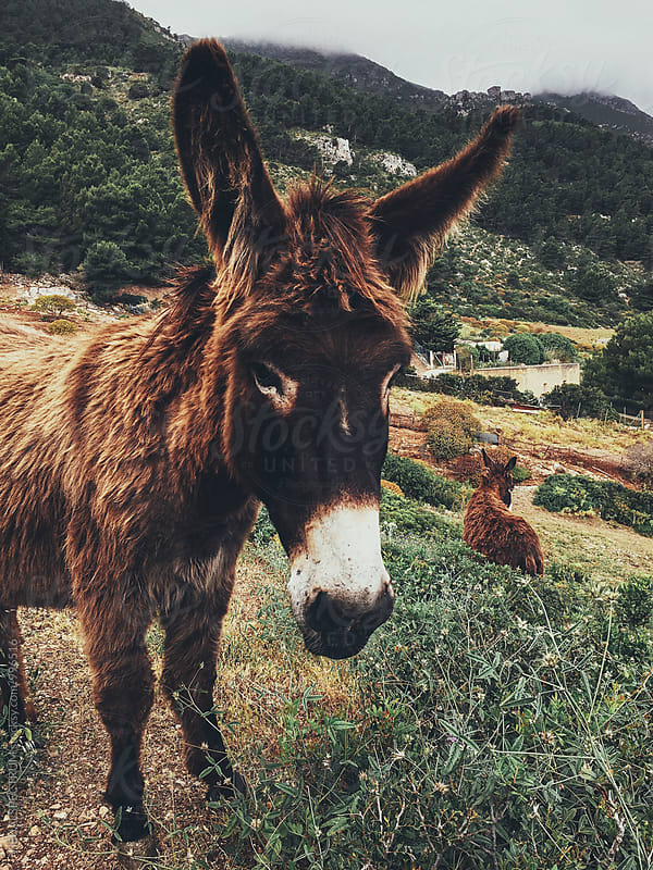Burro Portrait in Green Sicilian Countryside by Julien L. Balmer for Stocksy United