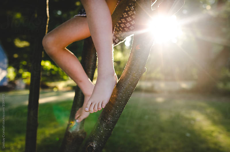 Feet and legs of child sitting in a tree in sunshine by Lindsay Crandall for Stocksy United