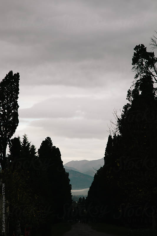 view of hills with silhouetted trees in italy by Sarah Lalone for Stocksy United